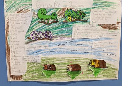Guinea Pigs and Chameleons by Ella